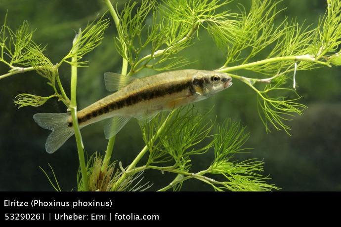 Die 8 beliebtesten fischarten in deutschlands gartenteichen for Goldfisch haltung im teich