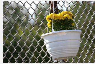 Ein Maschendrahtzaun mit Blumentopf. Die Maschen sind gute Rankhilfen für Kletterpflanzen