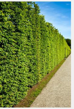 sichtschutz im garten - ideen & anregungen | pina design®, Garten und Bauen
