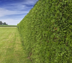 Sichtschutz für den Garten mit Pflanzen oder Sonnensegel